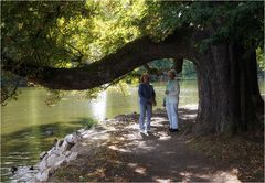 seltsamer alter Baum
