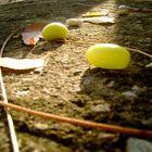 Semillas amarillas
