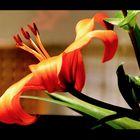 <Semplicemente Fiore in casa>