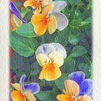 semplici fiorellini