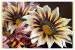 semplici fiori...