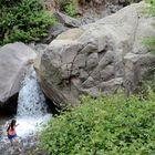 Sendero Los Peumos - Aguas de Ramón