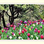 Sending You Tulips