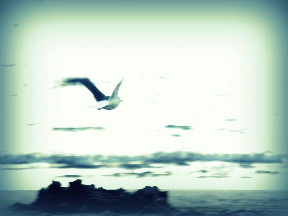 senso di liberta'