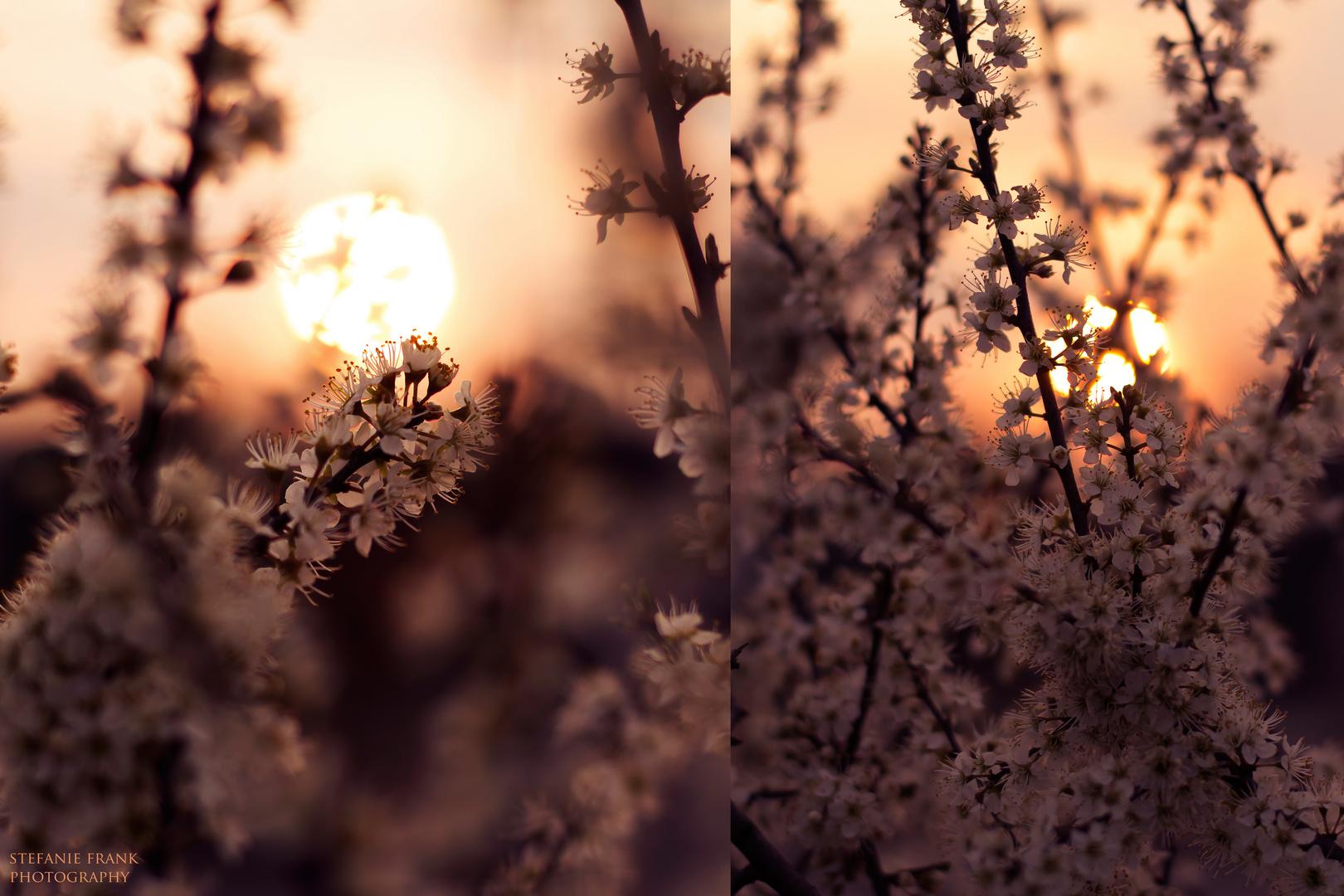 sensual blossom