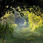 Sentier de lumière….