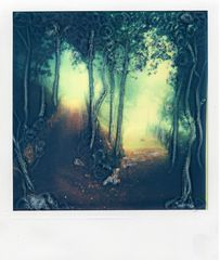sentiero - gianni grattacaso, polaroid manipulations