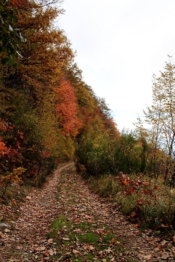 Sentiero Montevergine (AV)