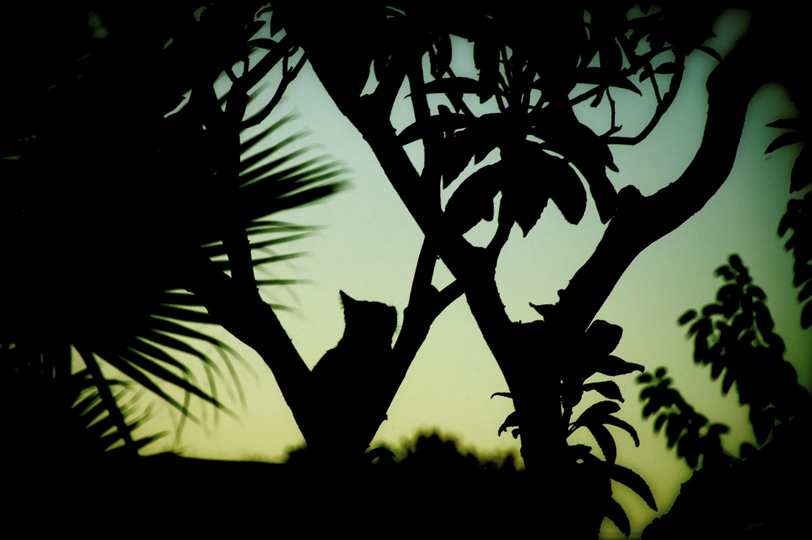 Sentinella notturna