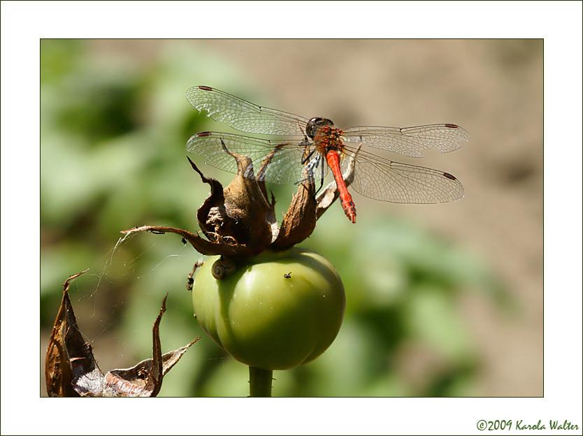 September in Mutters Garten_1