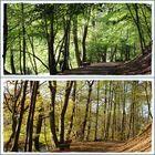 September und November im Wald