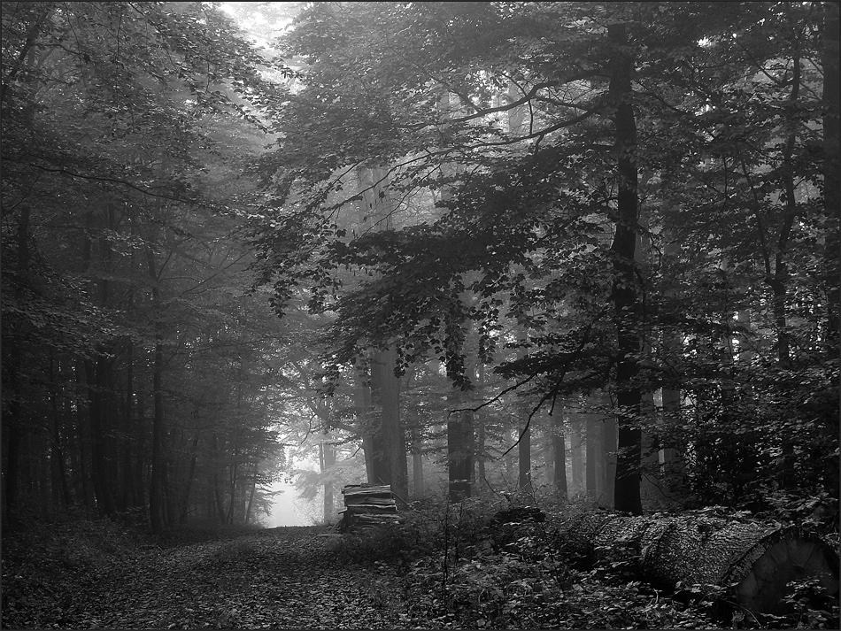 Septemberwald
