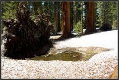 Sequoia 2
