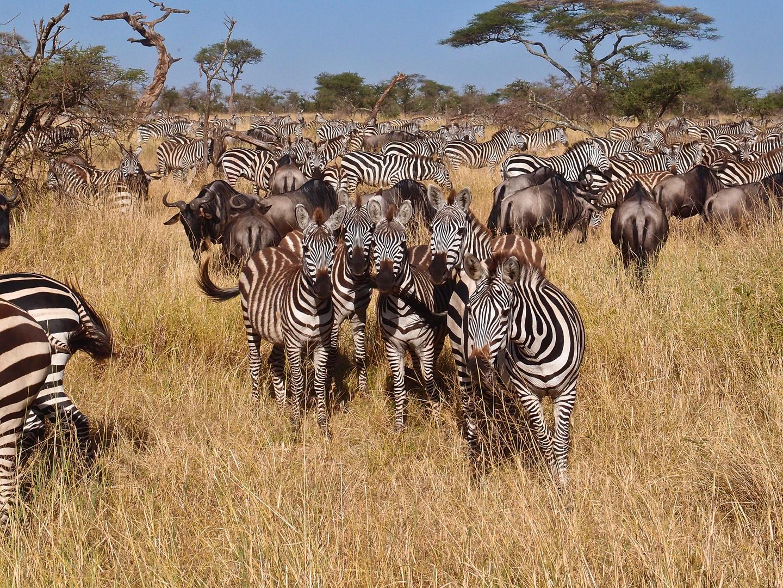 Serengeti 2012