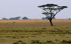 Serengeti Impressionen ~ 2 ~