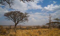 Serengeti Impressionen ~ 4 ~