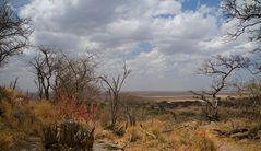 Serengeti Impressionen ~ 5 ~