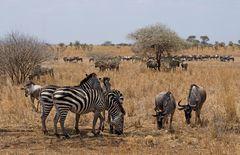 Serengeti Life Insurance