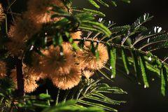 Serie,  entre hadas  y libélulas en el bosque 10