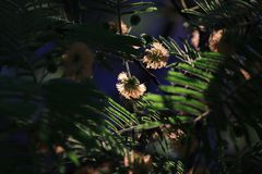 Serie,  entre hadas  y libélulas en el bosque 12