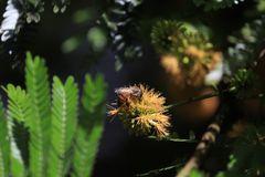 Serie,  entre hadas  y libélulas en el bosque 13
