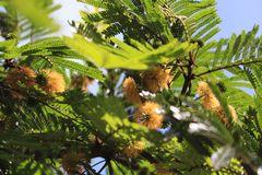 Serie,  entre hadas  y libélulas en el bosque 14