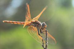 Serie,  entre hadas  y libélulas en el bosque 3