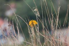 Serie,  entre hadas  y libélulas en el bosque 4