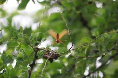 Serie,  entre hadas  y libélulas en el bosque 5