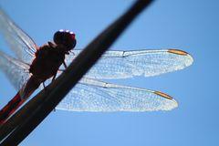 Serie,  entre hadas  y libélulas en el bosque 7