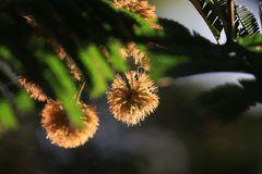 Serie,  entre hadas  y libélulas en el bosque 8