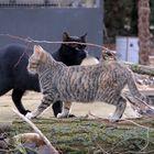 serie-gatos