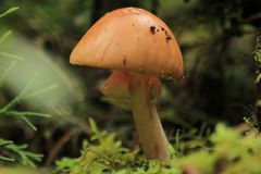 Serie , Mundo Mágico; como pequeñas casas en el bosque 8