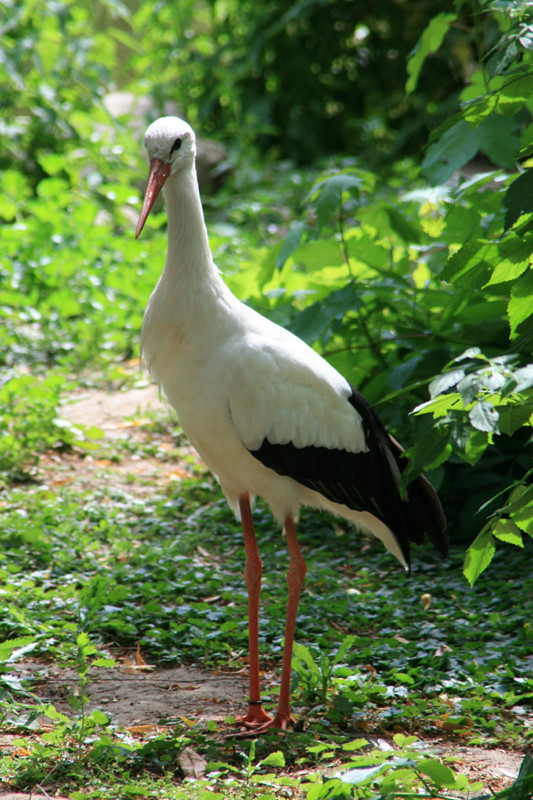 Serie Rostocker Zoo 4 / 8