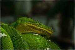 ~Serpent~