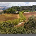 Serranía de Ronda 2