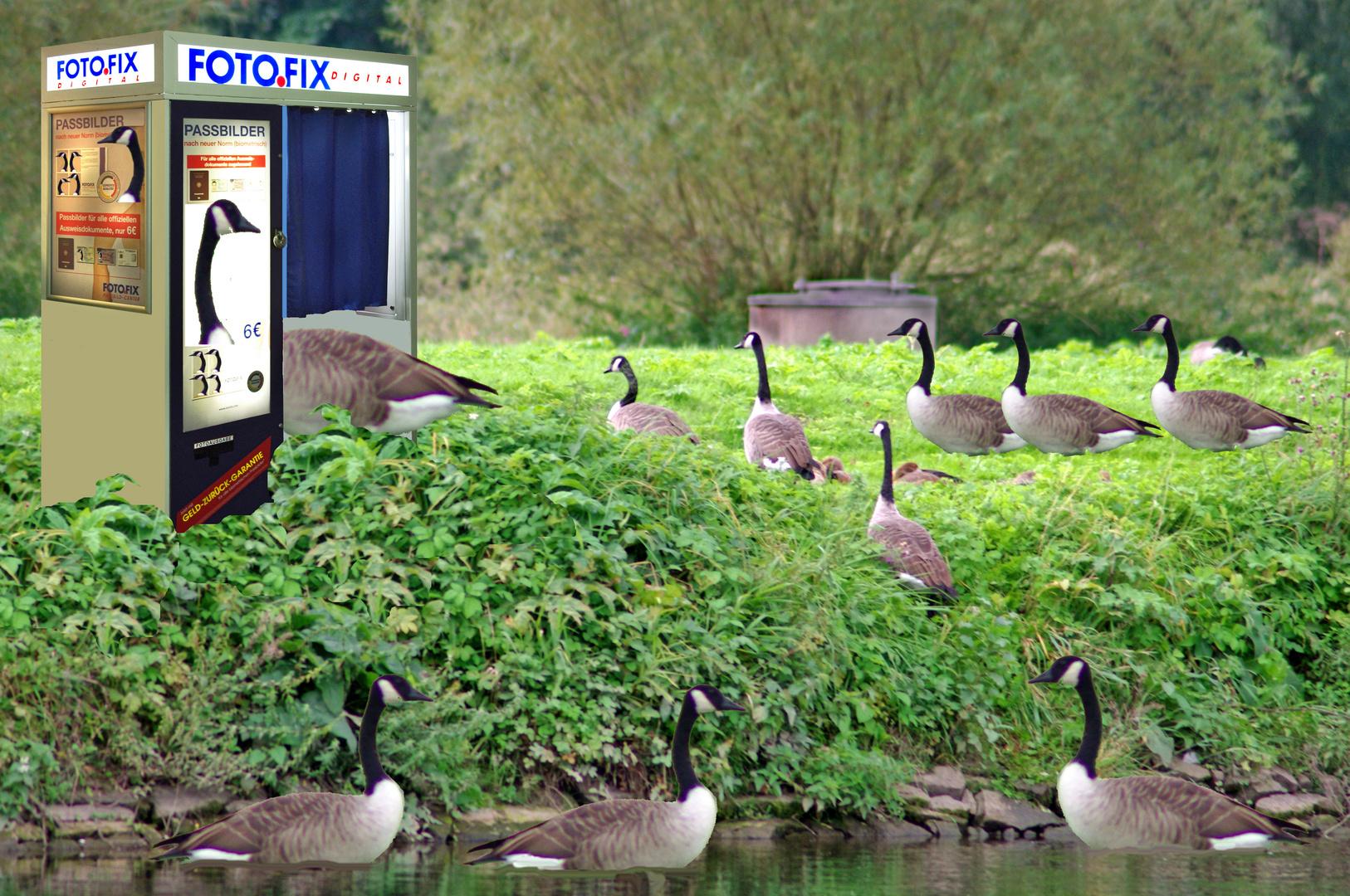 Service für Zugvögel