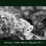Servus Maria Hauswirth