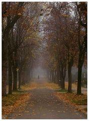 Setlsam im Nebel zu wandern