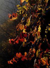 Seulement un jour d'automne