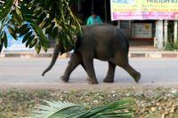 Sexy Elefant
