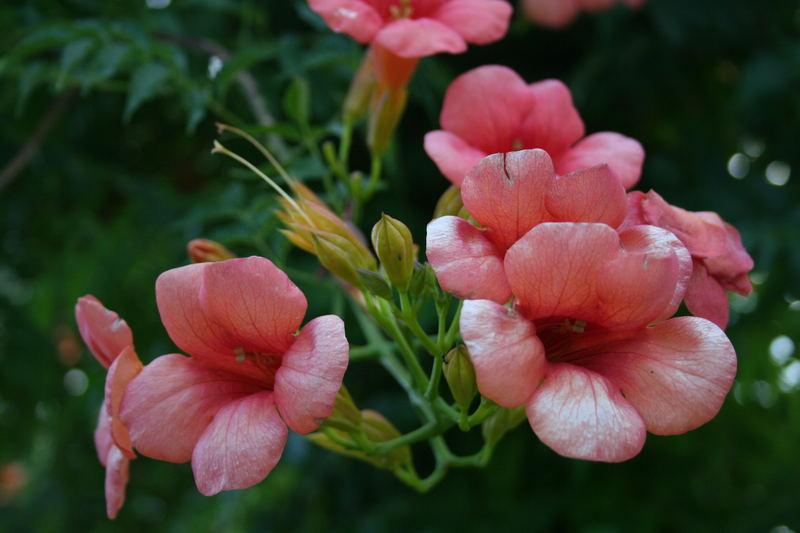 Sfumature di rosa