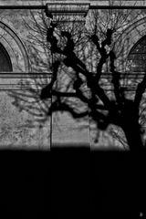 shade.play (#2)