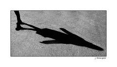 - shadow 2 -