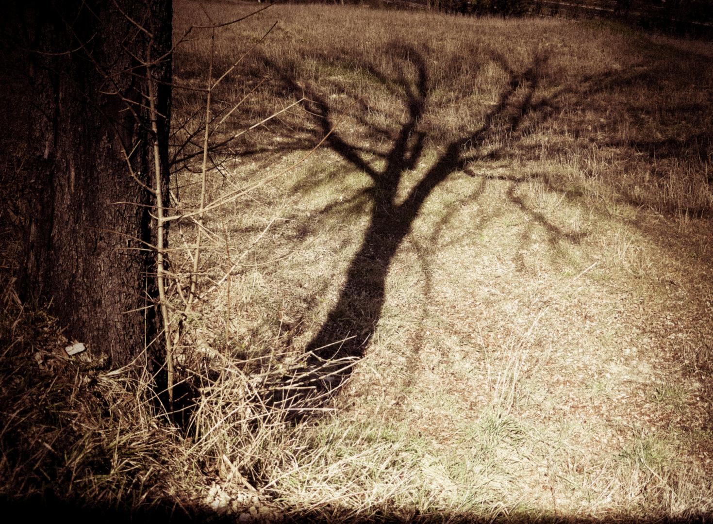 ..shadow...
