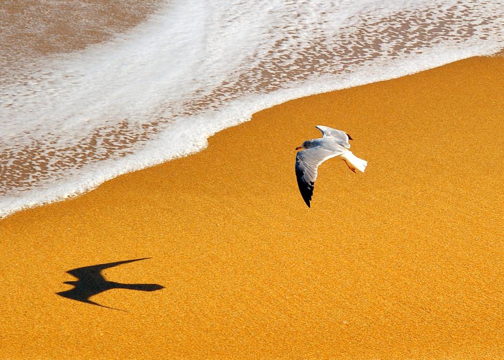shadow of gull