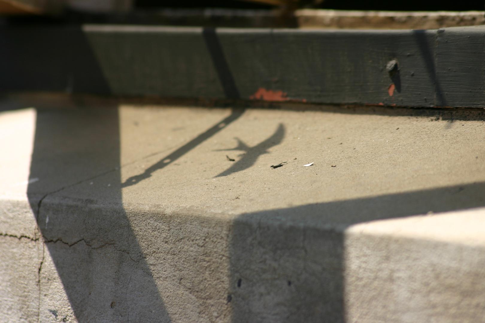 Shadow Of Swallow In Window