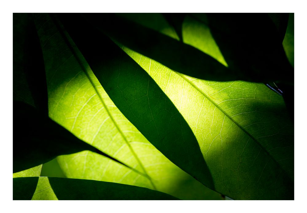 Shadow on leaves-10