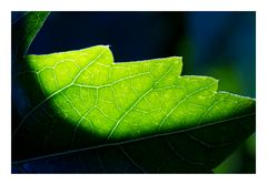 Shadow on leaves-3