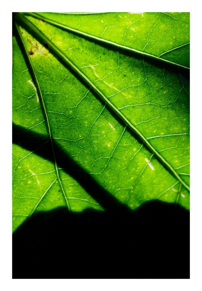 Shadow on leaves-4